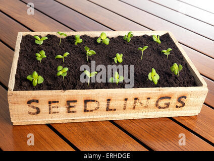 Seedling box with new growth - Stock Photo