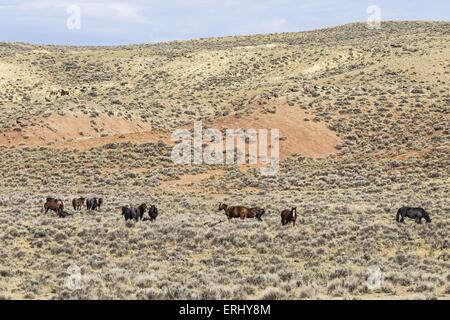 Mustangs - Stock Photo