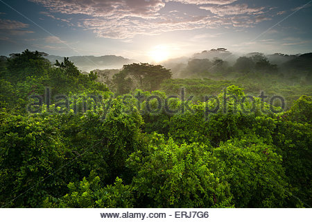 Stunning sunrise in the rainforest of Soberania national park, Republic of Panama. - Stock Photo