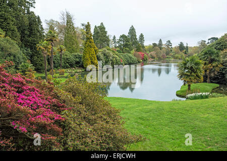 Hinomayo bringing spring color to the garden of Sheffield Park & Garden and Middle Lake view, Uckfield, East Sussex, - Stock Photo
