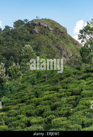 Little Adam's Peak and Tea Plantations, Ella, Sri Lanka - Stock Photo