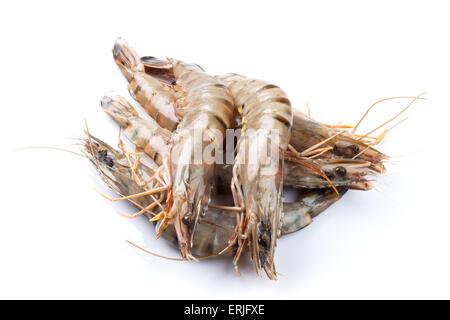 Fresh raw tiger prawns. Isolated on white background - Stock Photo