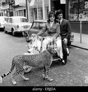 Carnaby Street, London, 4th April 1966. Photo-call for opening of new Tomcat Shop. Kinna the Cheetah with model - Stock Photo