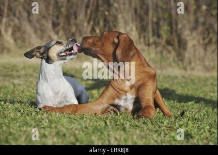 2 dogs - Stock Photo