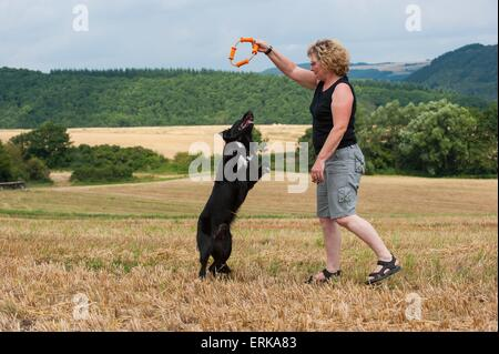 woman with Border Collies - Stock Photo