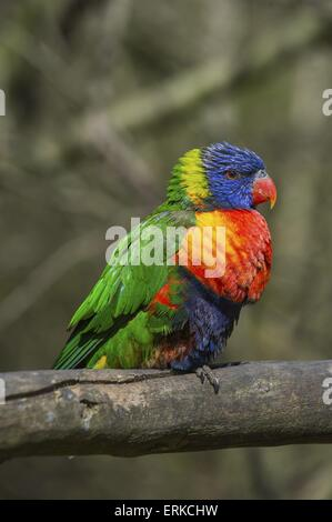 Bird Park Marlow - Stock Photo