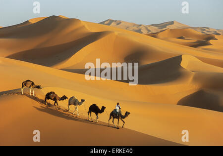 Berber with dromedaries, great sand dunes of Erg Chebbi, Sahara desert, near Merzouga, Morocco - Stock Photo