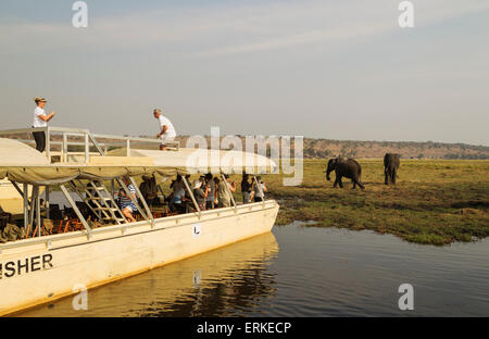 Tourists on a boat cruise on the Chobe River observe a group of feeding African Elephants (Loxodonta africana) - Stock Photo