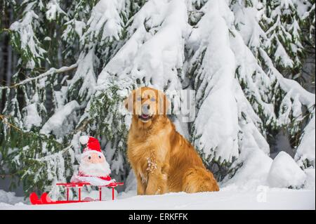Santa Claus Sitting In A Sledge Christmas Decoration Stock Photo