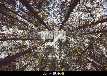 Photo of the forest taken from down below showing nice and rare perspective of the forest itself. - Stock Photo