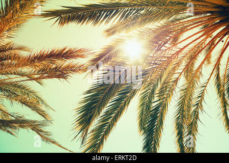 Palm trees and shining sun over bright sky background. Vintage style. Toned photo with vintage colorful tonal filter - Stock Photo