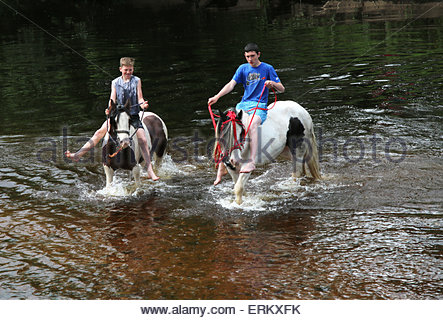 Appleby-in-Westmorland, Cumbria, UK. 4th June 2015. Riding horses in the River Eden during the annual event of Appleby - Stock Photo