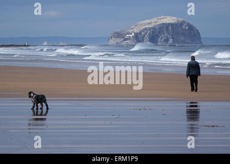 Woman and dog walking on beach, Bass Rock in Distance - Stock Photo