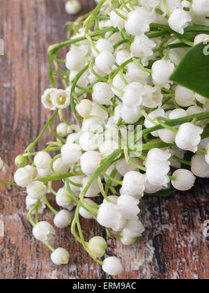 Beautiful lily of the valley flowers - Stock Photo