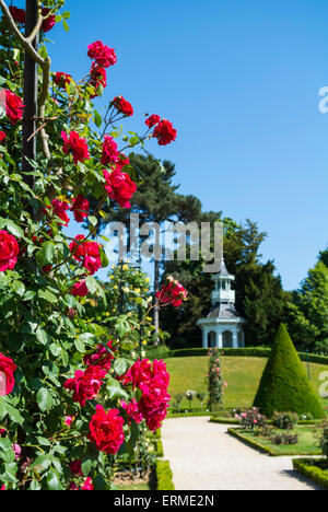 Paris, France, Rose garden at Parc de Bagatelle, Bagatelle park - Stock Photo