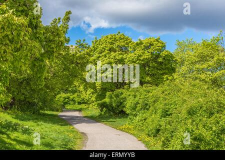 Beautiful Glade During Summertime with Green Bushes, Trees and a Cloudy Sky in Stockholm, Sweden