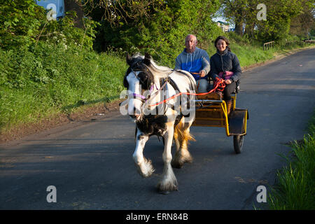 Appleby, Cumbria, Uk. 5th June, 2015.  Early morning horse carriage ride at the Appleby Horse Fair in Cumbria.  - Stock Photo