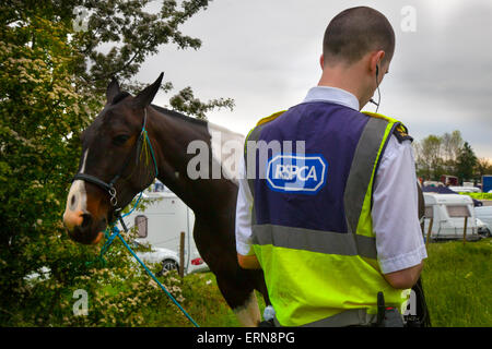 Appleby, Cumbria, Uk. 5th June, 2015.  RSPC officer at the Appleby Horse Fair in Cumbria.  The Fair is an annual - Stock Photo