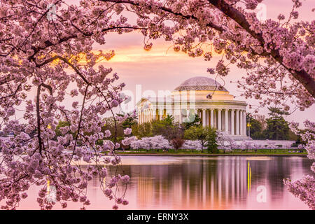 Washington, DC at the Tidal Basin and Jefferson Memorial during the spring cherry blossom season. - Stock Photo