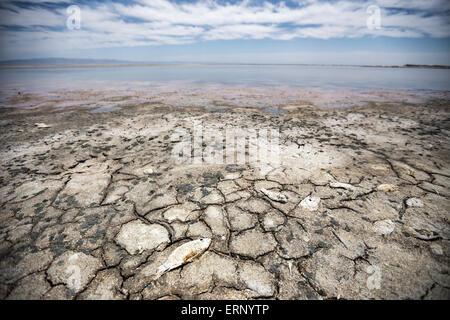 Salton City, California, USA. 04th June, 2015. As California contends with severe drought, the Salton Sea, the state's - Stock Photo