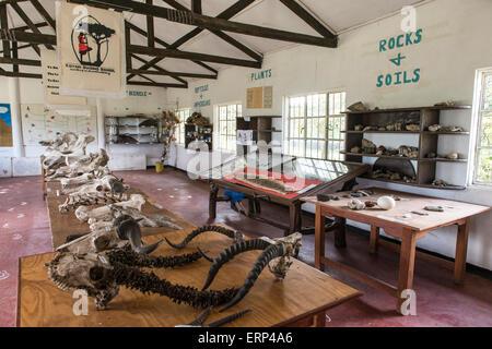 Koiyaki Guiding School Maasai Mara National Reserve in southern Kenya Africa - Stock Photo