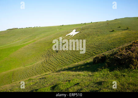 White horse figure carved in chalk scarp slope at Alton Barnes, Wiltshire, England, UK - Stock Photo