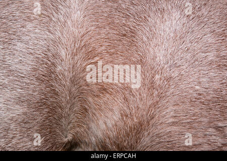 Close up horse skin concept for background - Stock Photo