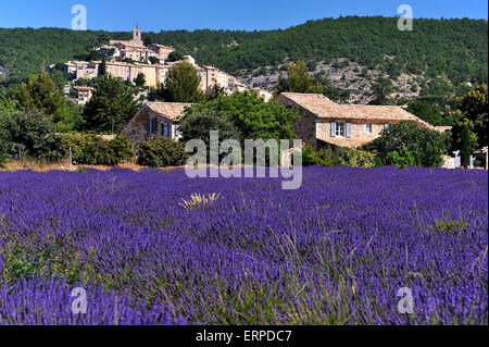 Village Banon in the Provence and fields of Lavender