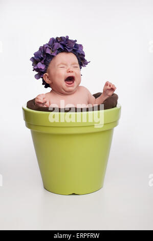 A crying 3 month old baby girl wearing a purple, hydrangea hat and sitting in a lime green flower pot. - Stock Photo