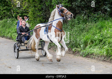 Appleby in Westmorland, Cumbria UK. 6th June 2015. Members of the UK's gypsy and traveller communities converge - Stock Photo