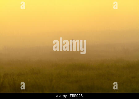 Common crane in silhouette in morning light with fog allaround and warm morning light, sweden - Stock Photo