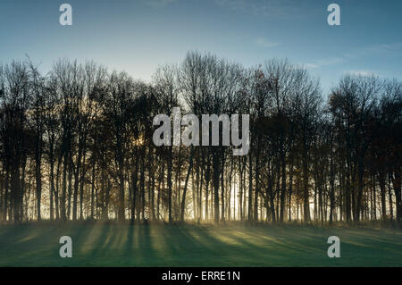 Rays of autumn sunlight are shining through bare trees, casting long shadows across misty grass in a rural field - Stock Photo