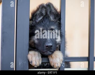 Very sad puppy in shelter cage - Stock Photo