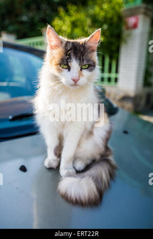 Cat sitting on a car, Prague, Czech republic - Stock Photo