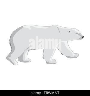 polar bear isolated on a white background - Stock Photo