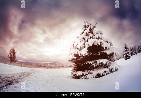 Winter scenic with spruce in the mountain park at dramatic sky in Kazakhstan - Stock Photo