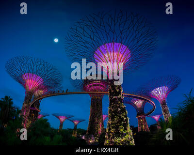 SINGAPORE-JUN 1: Evening view of The Supertree Grove at Gardens by the Bay on Jun 1, 2015 in Singapore.