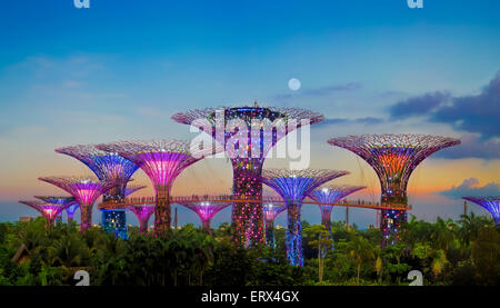 SINGAPORE-JUN 1: Evening view of The Supertree Grove at Gardens by the Bay on Jun 1, 2015 in Singapore. - Stock Photo