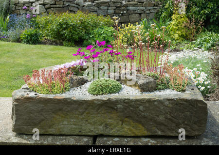 Superbe ... Alpines Planted In A Stone Garden Sink   Stock Photo