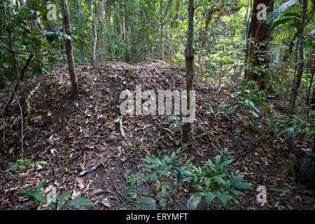 Nest mound of the Orange-footed Scrubfowl (Megapodius reinwardt) in the Daintree region, Queensland, Australia - Stock Photo