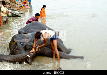 Elephant bathing at river sone ; Bihar ; India - Stock Photo