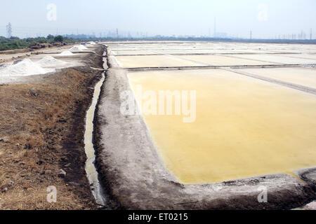 Sea salt  farming from wadala salt farms Mumbai Maharashtra India - Stock Photo