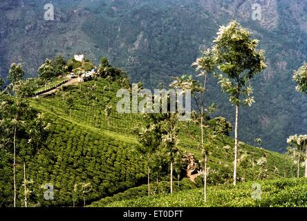 Tea garden ; Coonoor ; Nilgiris ; Tamil Nadu ; India - Stock Photo