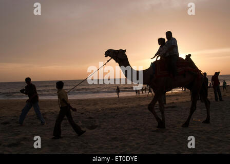 Tourists on camel ride in silhouette ; Alleppey Alappuzha beach ; Kerala ; India - Stock Photo