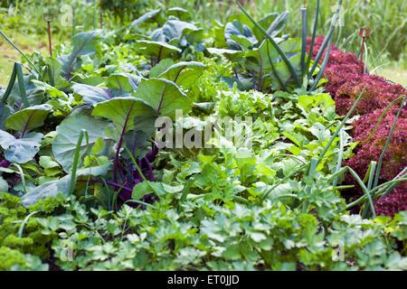 Vegetable garden with parsley, radicchio, lettuce, turnip, leek - Stock Photo