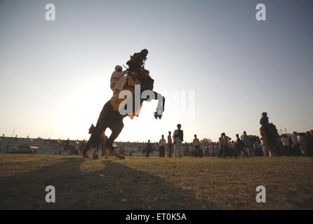 Nihang Sikh warrior horse showing stunts perpetual Sikh Guru Granth Sahib at Khalsa Sports ground ; Nanded - Stock Photo