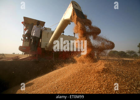 Combine harvester being operated by group of farmers harvesting golden wheat in fields of Bhopal ; Madhya Pradesh - Stock Photo