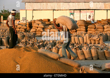 Worker carrying jute bag containing wheat to be emptied while other worker directing him at Harsud Mandi Bhopal - Stock Photo