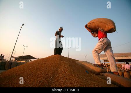 Worker carrying jute bag containing wheat at Harsud Mandi ; food grains market in Bhopal ; Madhya Pradesh ; India - Stock Photo