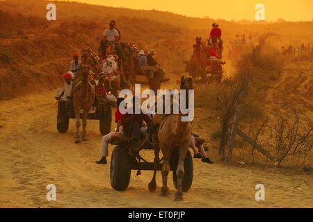 People travelling in camel cart at sunset for Pushkar fair ; Rajasthan ; India - Stock Photo
